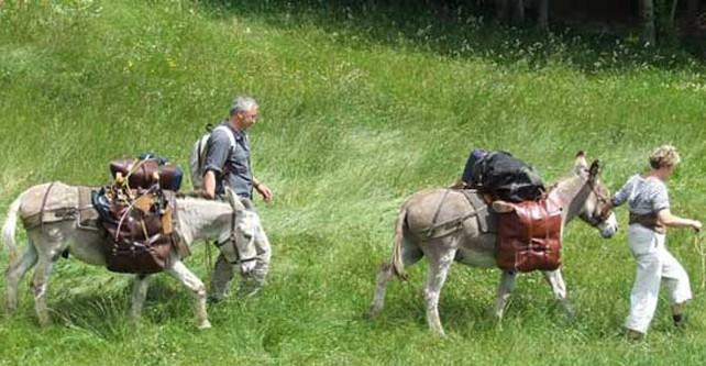 Promenades avec ânes bâtés – Les Attelées du Val d'Ay