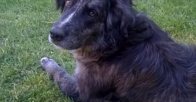 Nouveau aux gîtes, la Thalassothéra…..dog