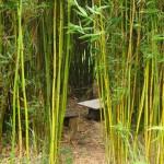 La cabane dans les bambous