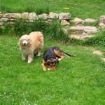 Lulu et Dumè